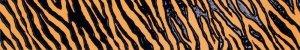 Фото  Zebra Orange
